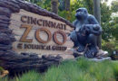 Gorilla Killing At Cincinnati Zoo Sparks Outrage